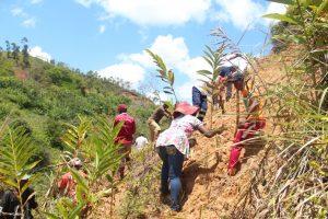 Conservation du sol