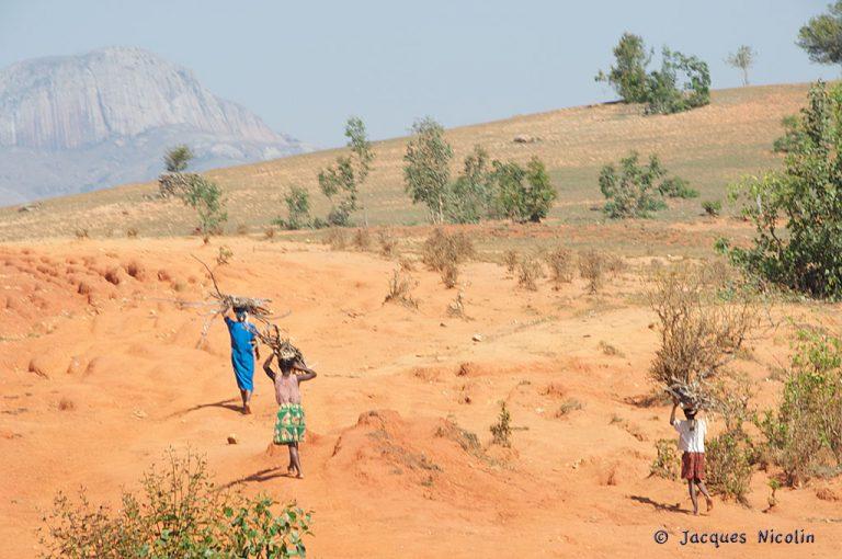 Désertification et dégradation des terres