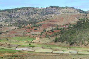 Restauration des Paysages Forestiers