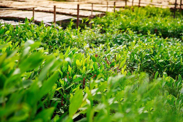 Reboisement 19 Janvier 2020 : Plantation de 60 000 000 jeunes plants dans tout Madagascar