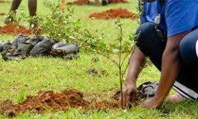 Reboisement national : les 99 millions de plantules seront rappliqués en hausse, d'ici ce janvier 2020