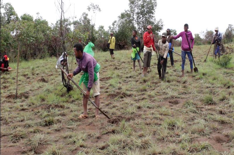 Suivis du reboisement officiel à Tampoketsa par le Ministère de l'Environnement et du Développement Durable (MEDD)