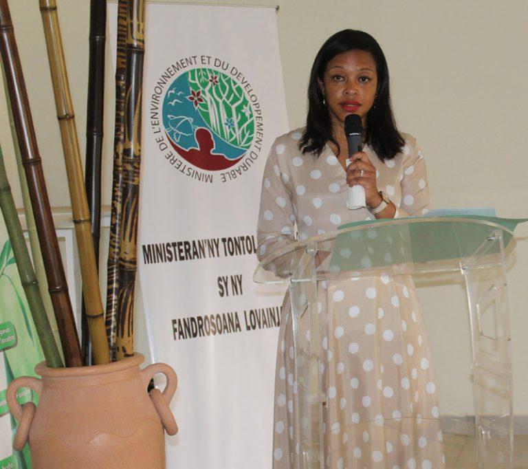 Le MEDD intègre le bambou dans la prochaine campagne de reboisement national