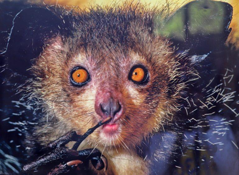 Troisième vendredi du mois de mai: Journée Mondiale des espèces menacées