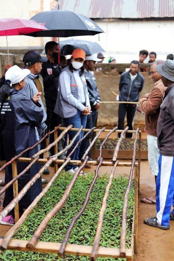 AMORON'I MANIA: 6 400 JEUNES PLANTS MIS EN TERRE A KIANJANDRAKEFINA