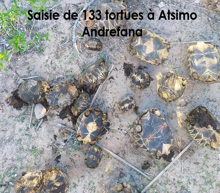 Saisie de 133 tortues à Atsimo  Andrefana