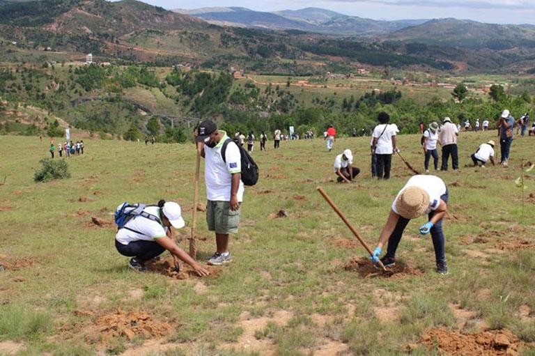 REBOISEMENT DE 22 000 JEUNES PLANTS DANS LA COMMUNE D'AMBALAVAO ATSIMONDRANO